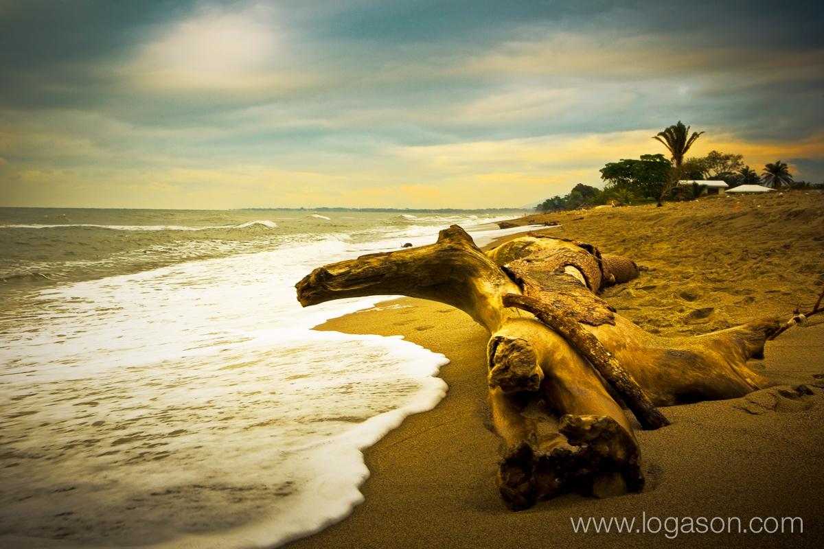 Driftwood on the beach of Ceiba, Honduras