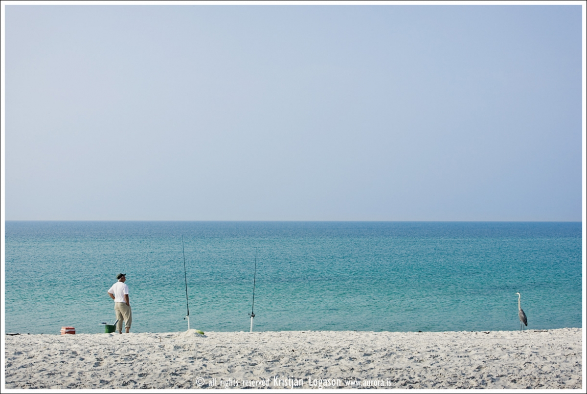 Man and grey heron waiting for the catch at the beach of Big lagoon state park