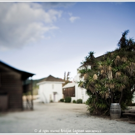 Tree and barrel amongst houses in Sonoma California
